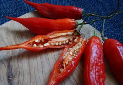 As pimentas e as suas histórias, cores, formas e sabores em livro
