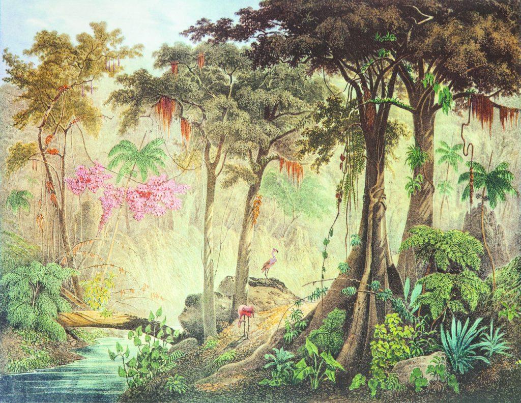 Johann Moritz Rugendas, Mata Virgem, perto de Mangaratiba, província do Rio de Janeiro, 1835. Gravura, 34 x 50,5 cm