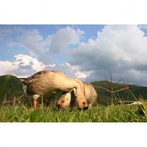 Fazenda-Ribeirão---foto-Antonio-Scarpinetti-IMG 0654x