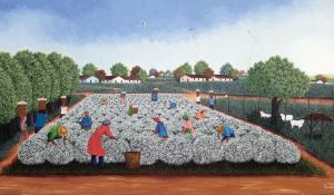 Rosa-Maria, Colheita de algodão